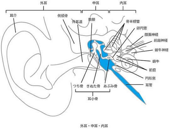 内耳・中耳・外耳